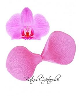 Veiner orhidee